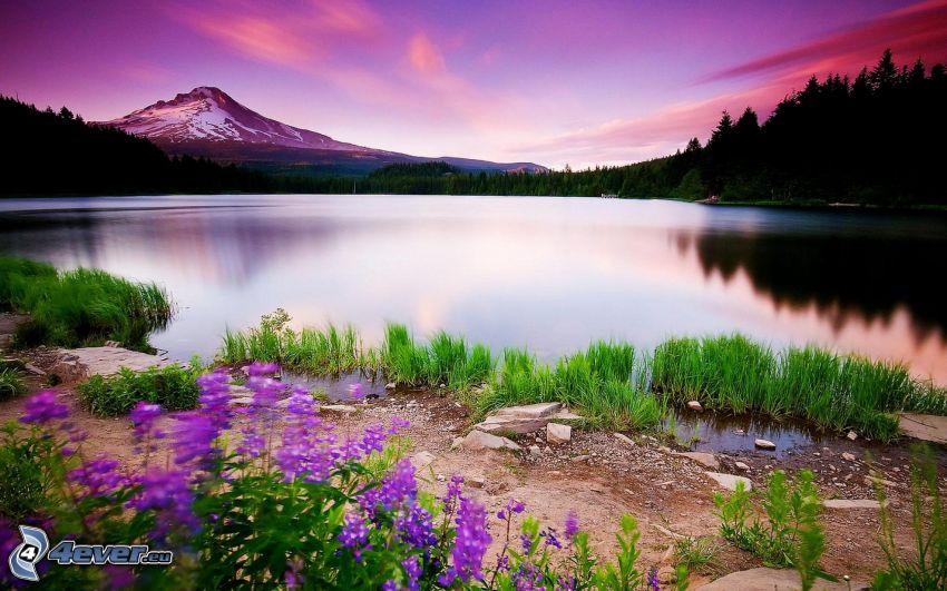 lago, colina, cielo púrpura