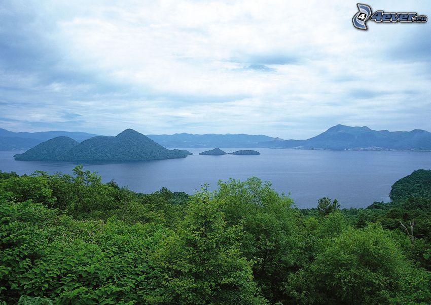 lago, isla, bosque