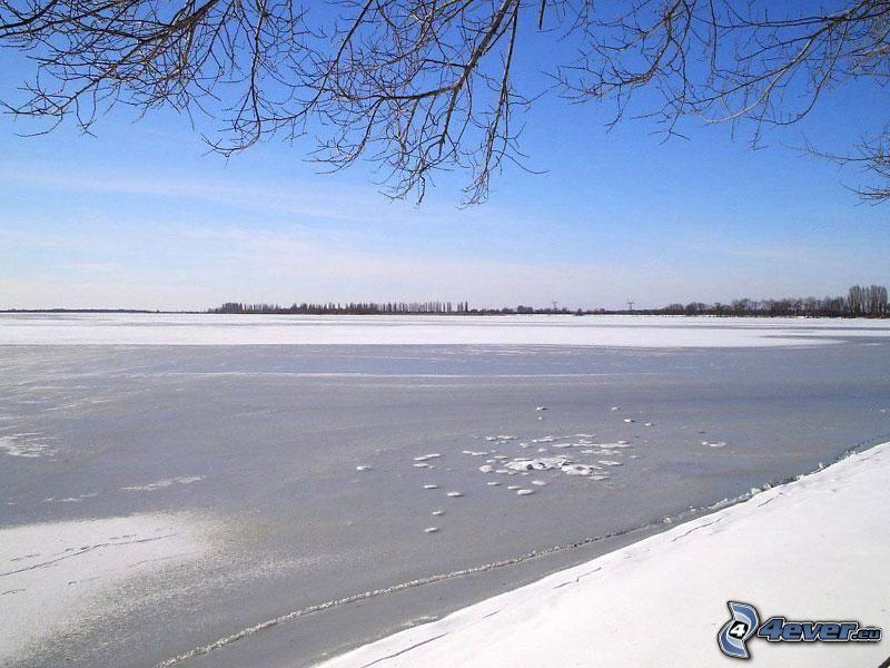 lago congelado, invierno, ramas, nieve