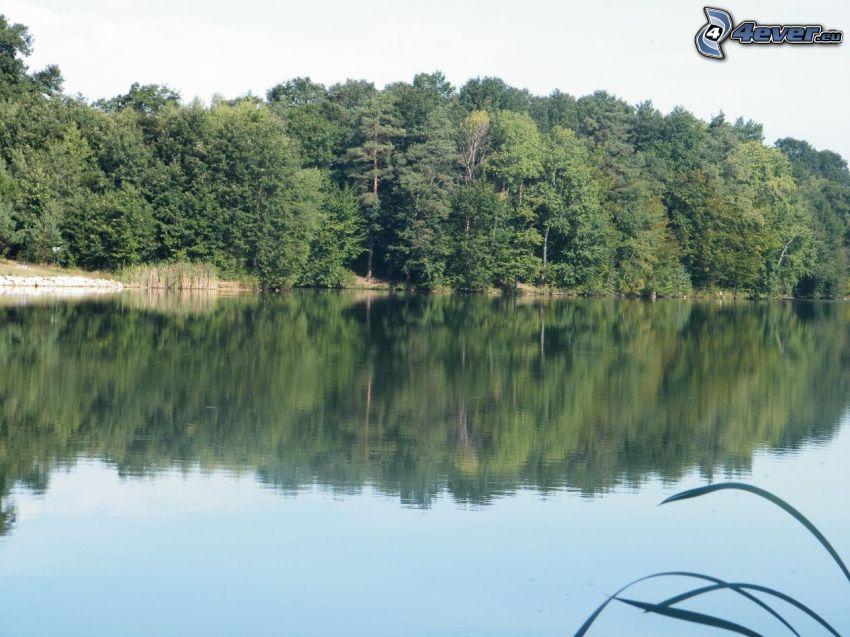 Lago en el bosque, árboles