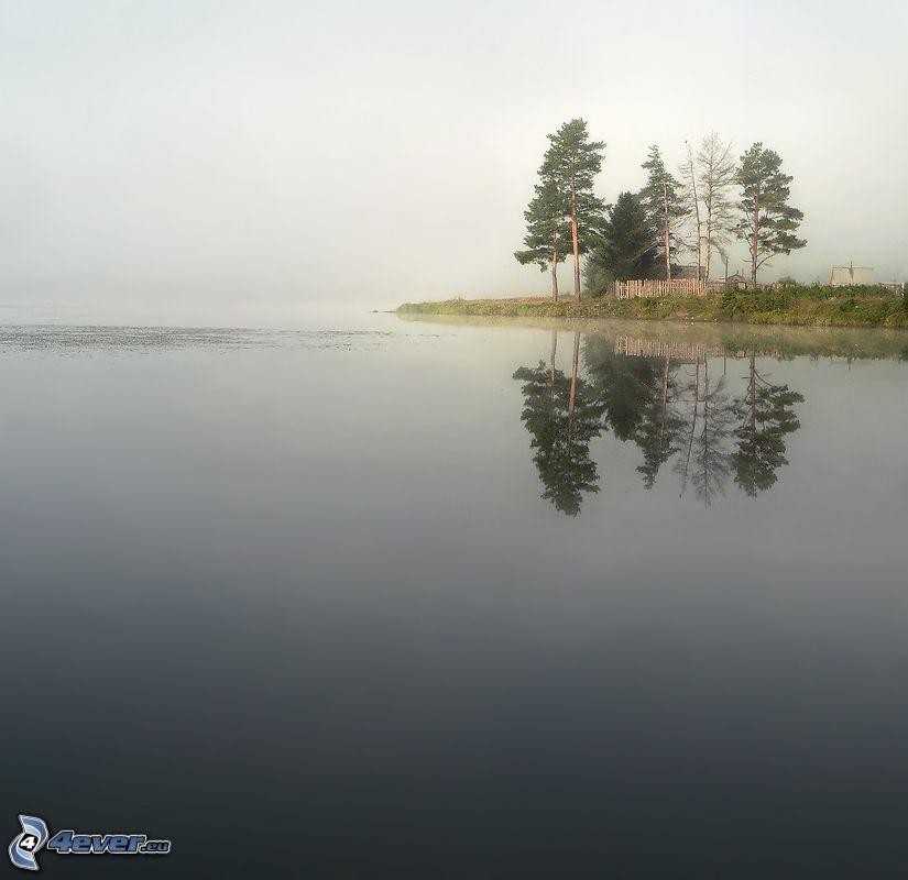 lago grande, árboles, niebla, isleta