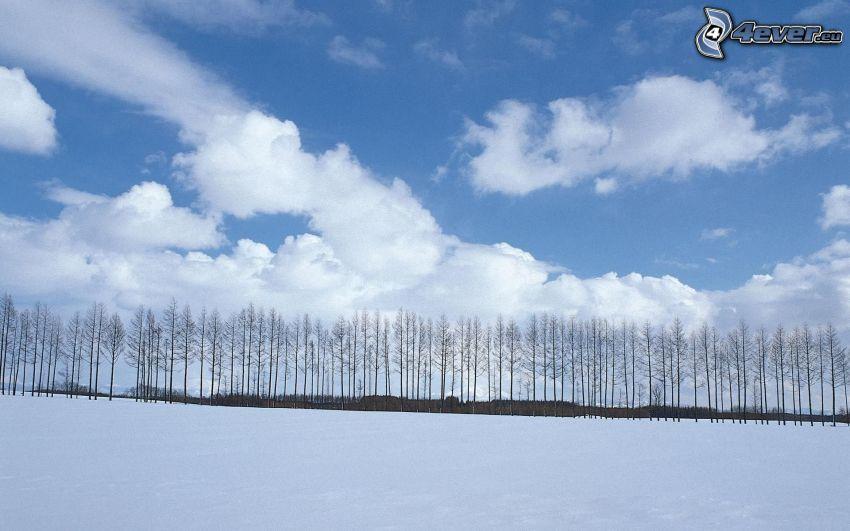 líneas de árboles, prado cubierto de nieve, nubes