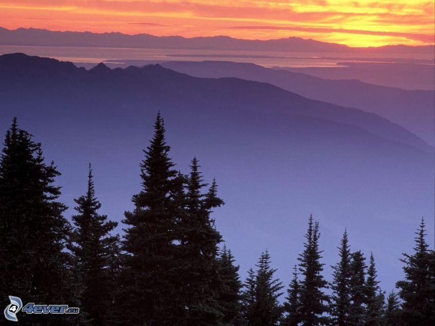 Mount Baker, Snoqualmie National Forest, árboles coníferos, colina, nubes