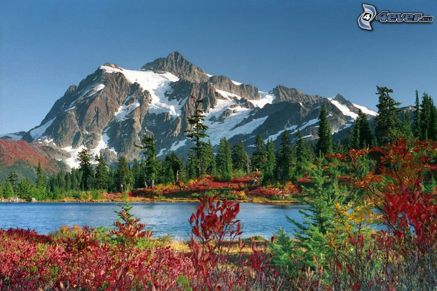 Mount Baker, Snoqualmie National Forest, lago, bosque