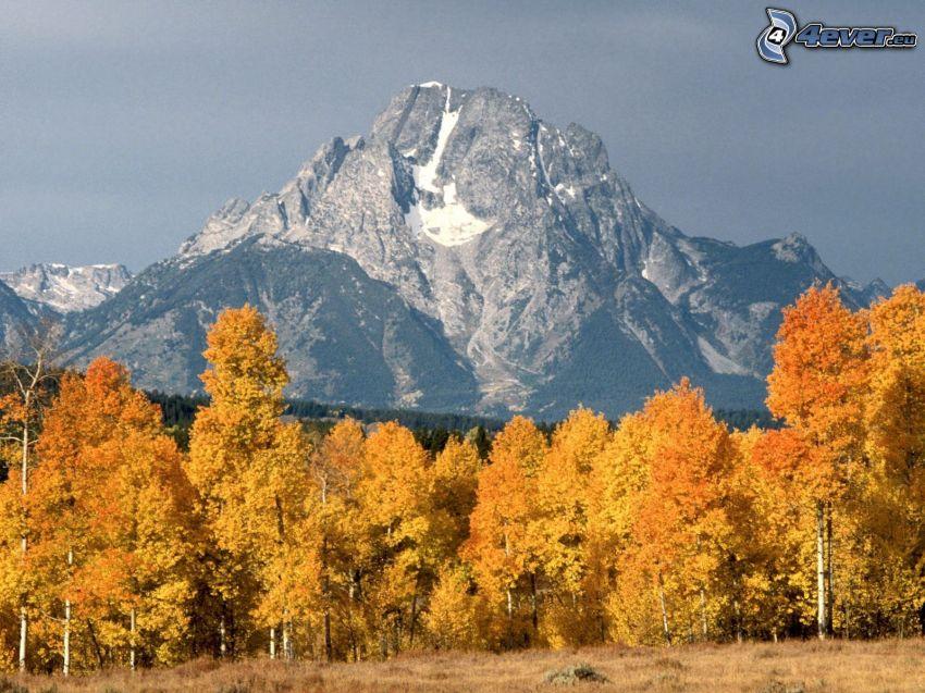 Mount Moran, Wyoming, montaña, árboles amarillos