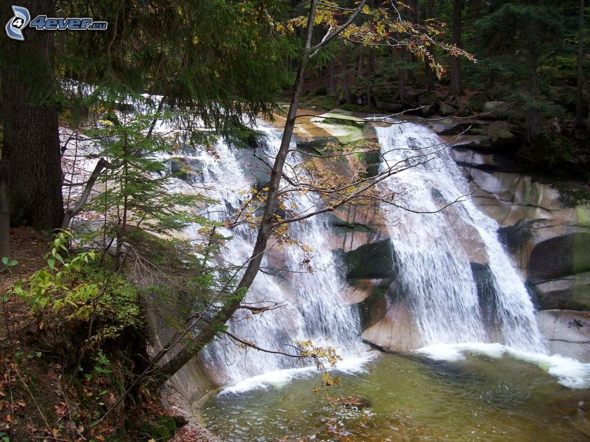 Mumlavský cascada, río en el bosque