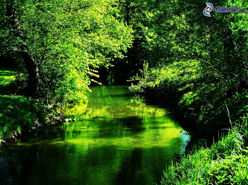 naturaleza verde, corriente