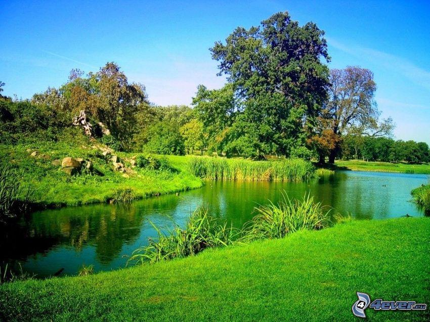 naturaleza verde, parque, lago, árbol ramificado, árbol cerca de un lago