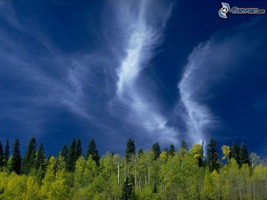 nubes altas, bosque, atmósfera