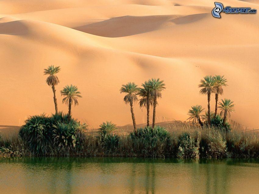 oasis, desierto, agua, arena