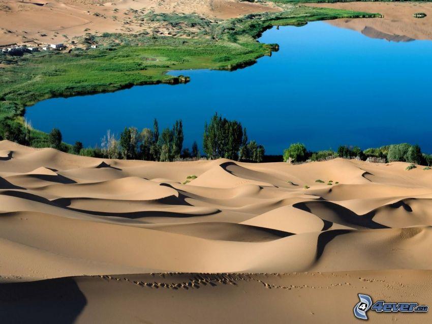 oasis, desierto, lago, arena