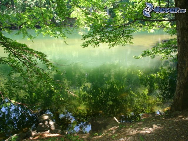 orilla, río, árbol