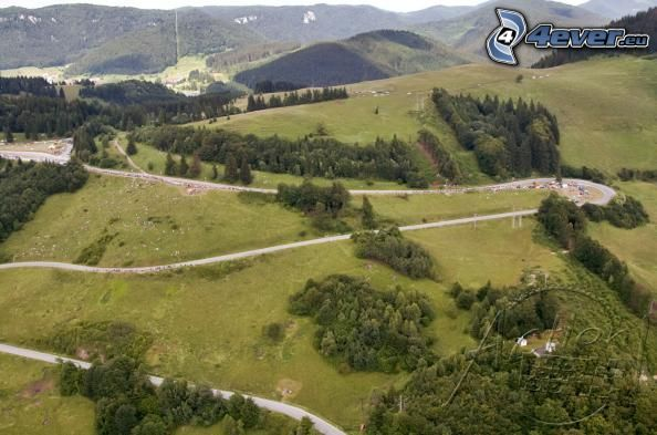 paisaje, camino, bosque