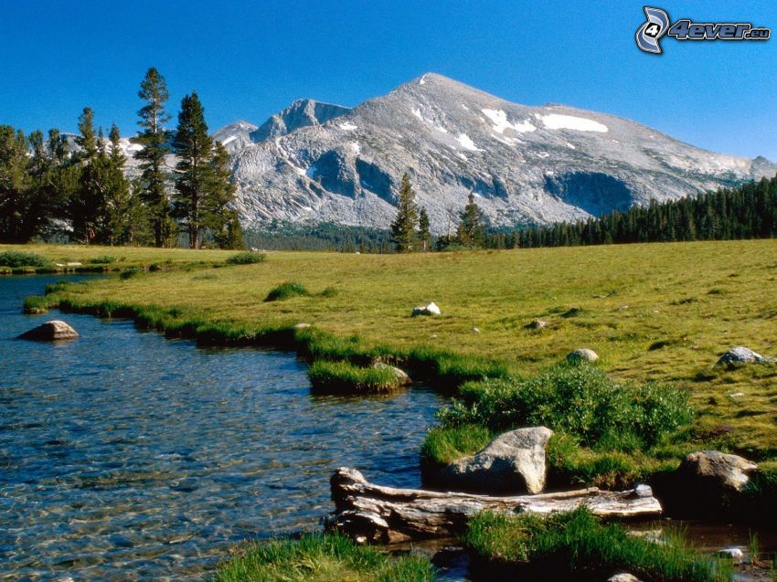 paisaje, montaña, bosque, colina, prado, corriente