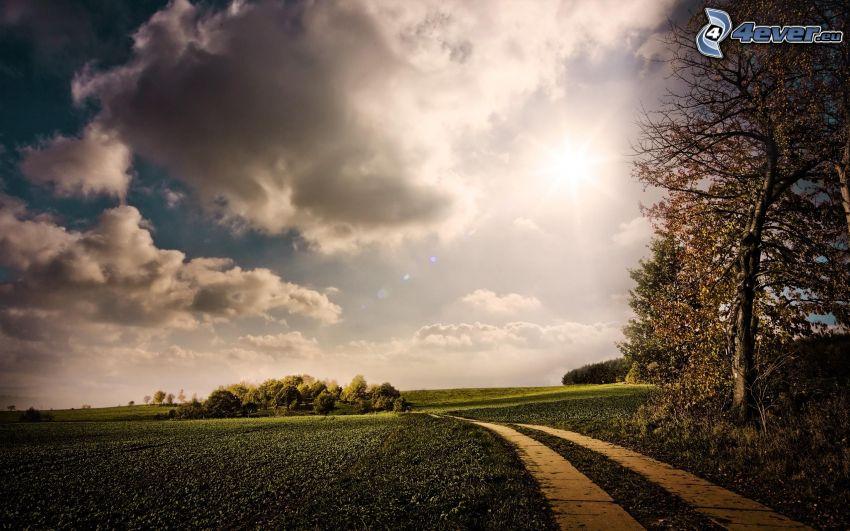 paisaje de otoño, camino de campo, prado, campo, sol, nubes, árboles