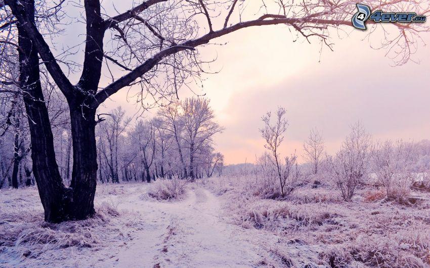 paisaje nevado, atardecer