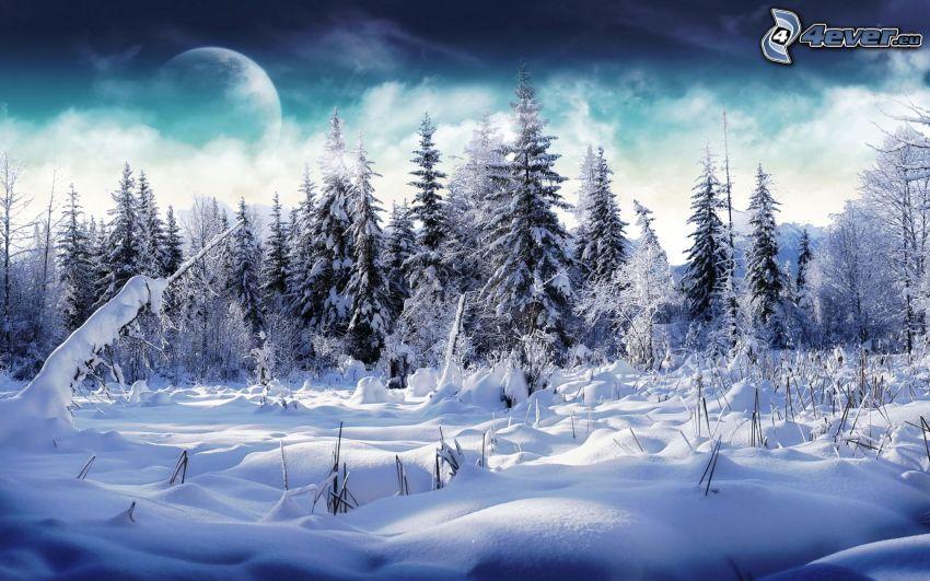 paisaje nevado, bosque