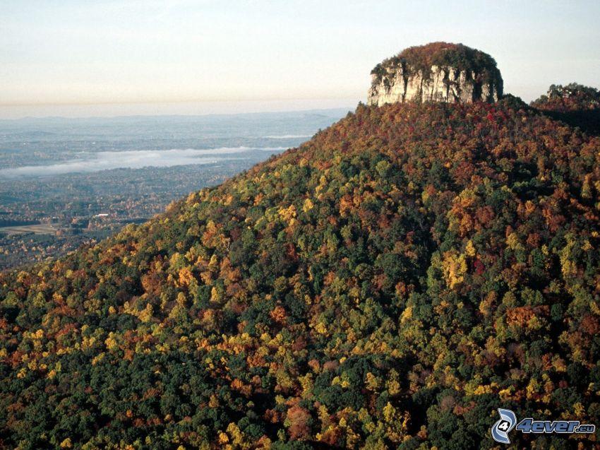 Pilot Mountain, colina, bosque, árboles otoñales