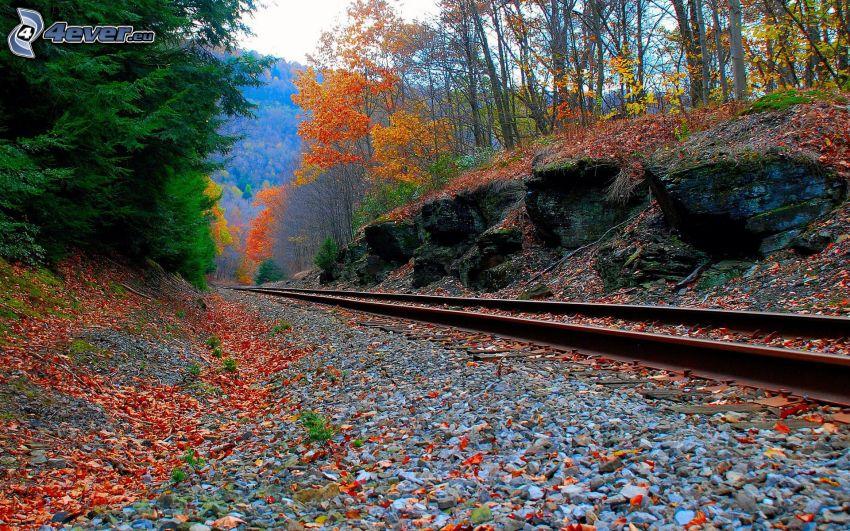 pista, bosque colorido del otoño, ferrocarril, hojas rojas, piedras