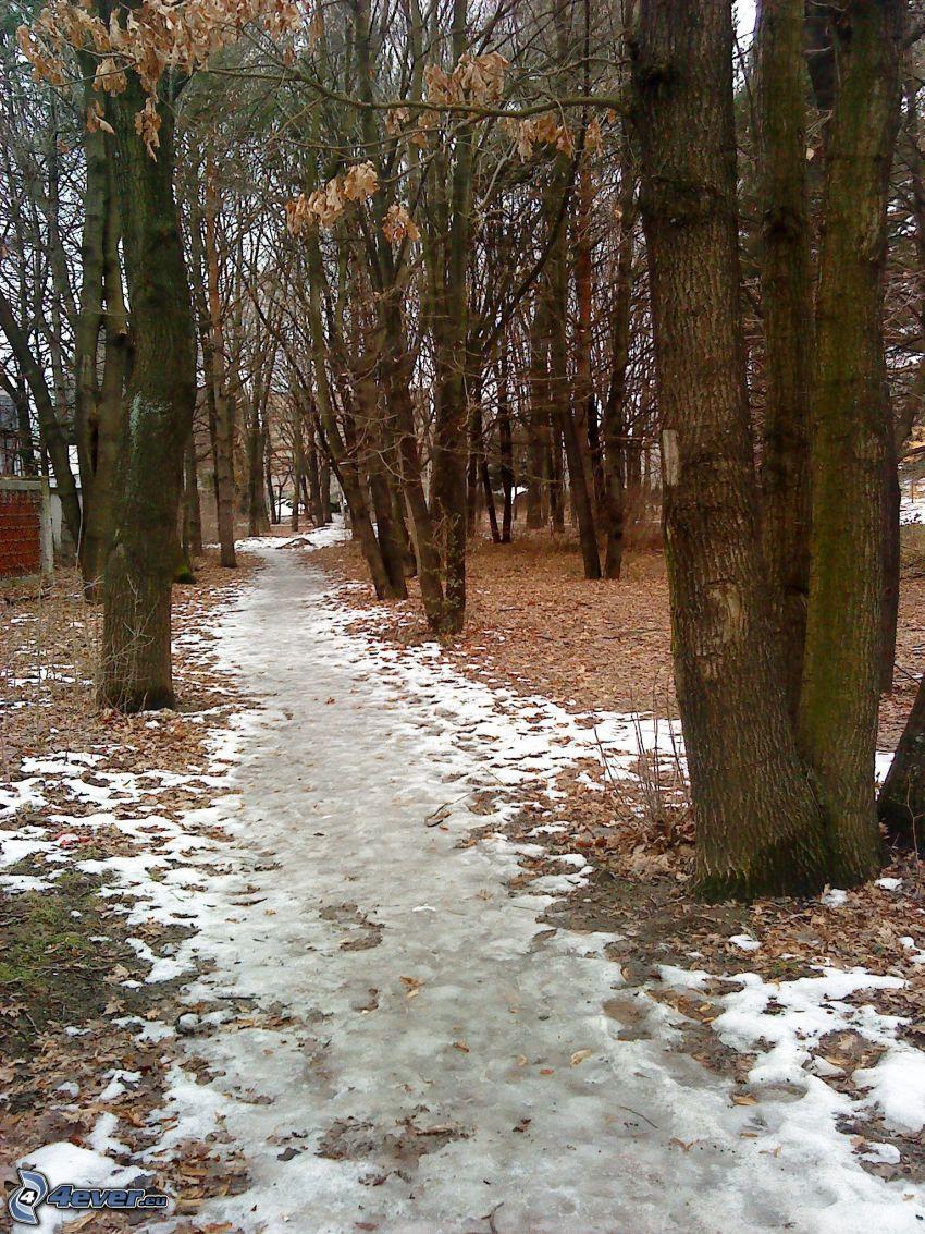 pista forestal, nieve, árboles, hielo