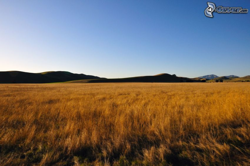 prado, hierba seca
