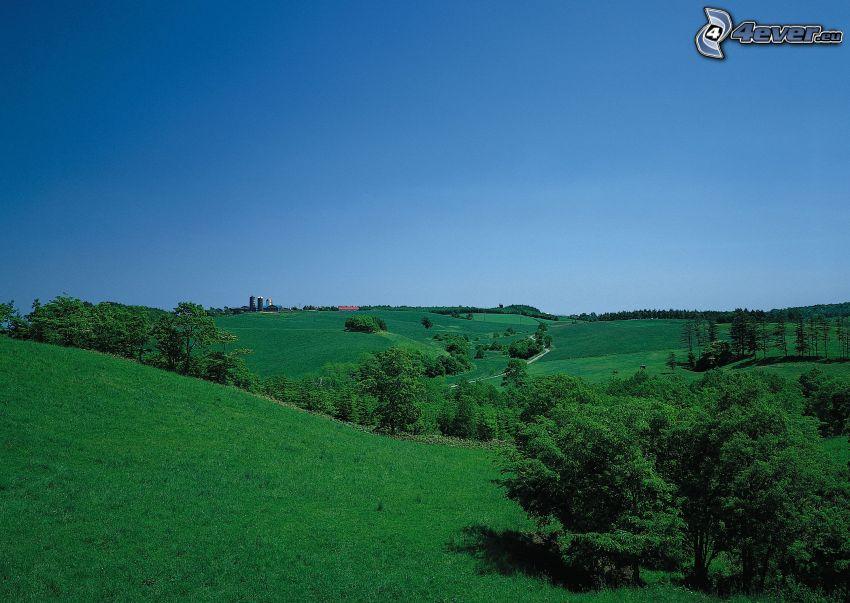 prado verde, árboles, naturaleza