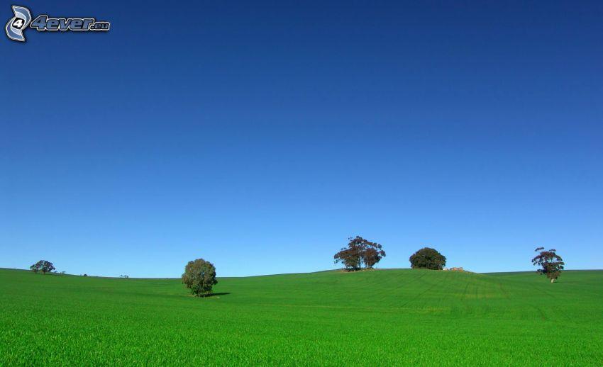 prado verde, árboles