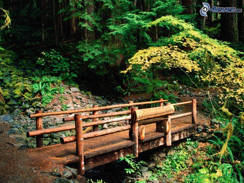 puente de madera en el bosque, acera