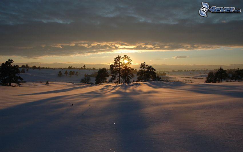 puesta de sol de invierno, nieve, árbol de sombra