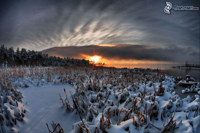 puesta de sol de invierno, paisaje nevado, bosque, lago