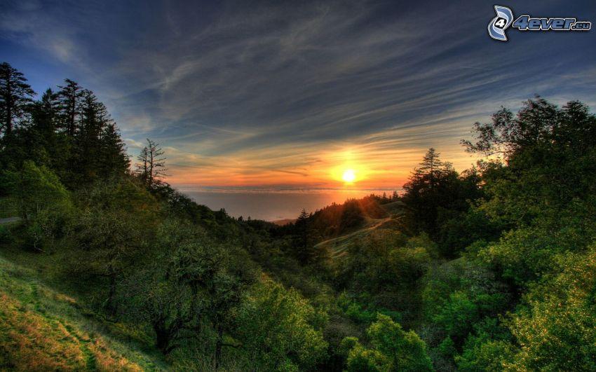 puesta de sol sobre bosque, árboles
