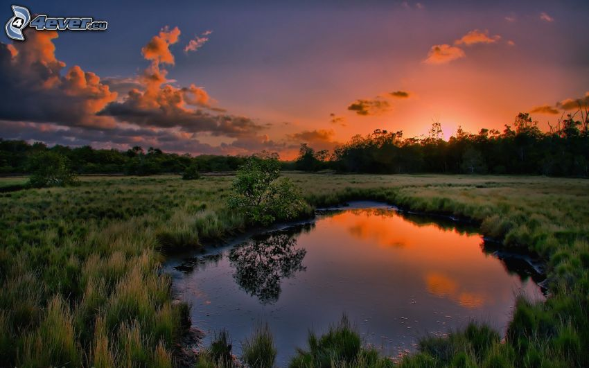 puesta de sol sobre el humedal