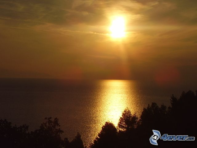 puesta de sol sobre el mar, vista al mar, aguas superficiales, silueta de un bosque