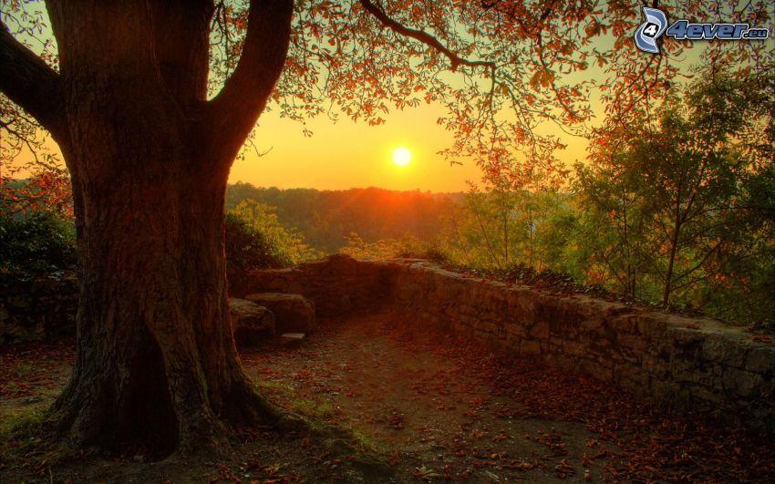 puesta de sol sobre los bosques, árbol enorme, muro de piedra