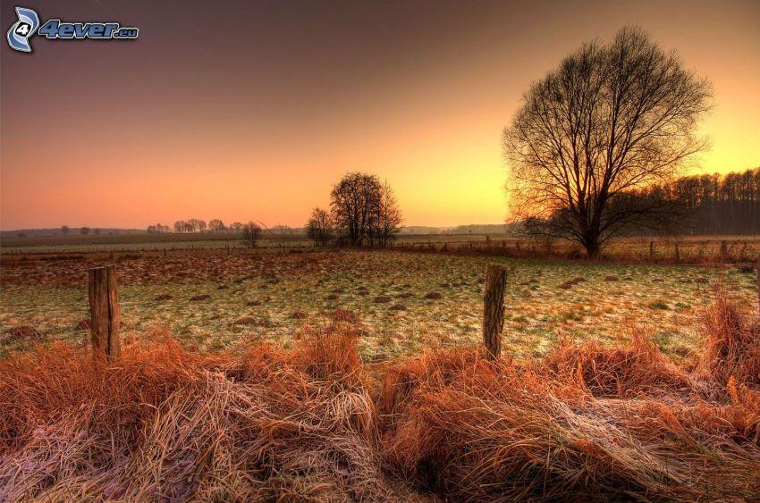 rancho, hierba seca, glaseado, después de la puesta del sol