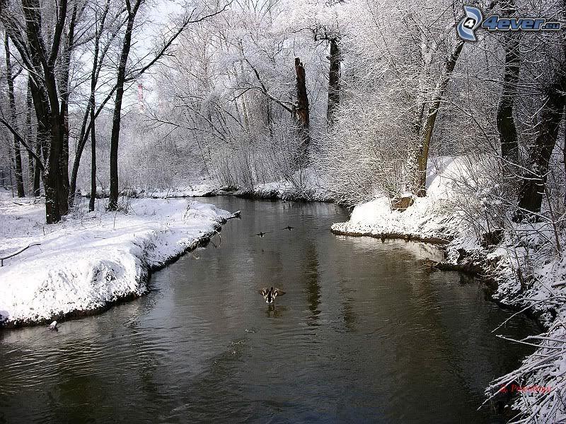 río en invierno, patos, bosque