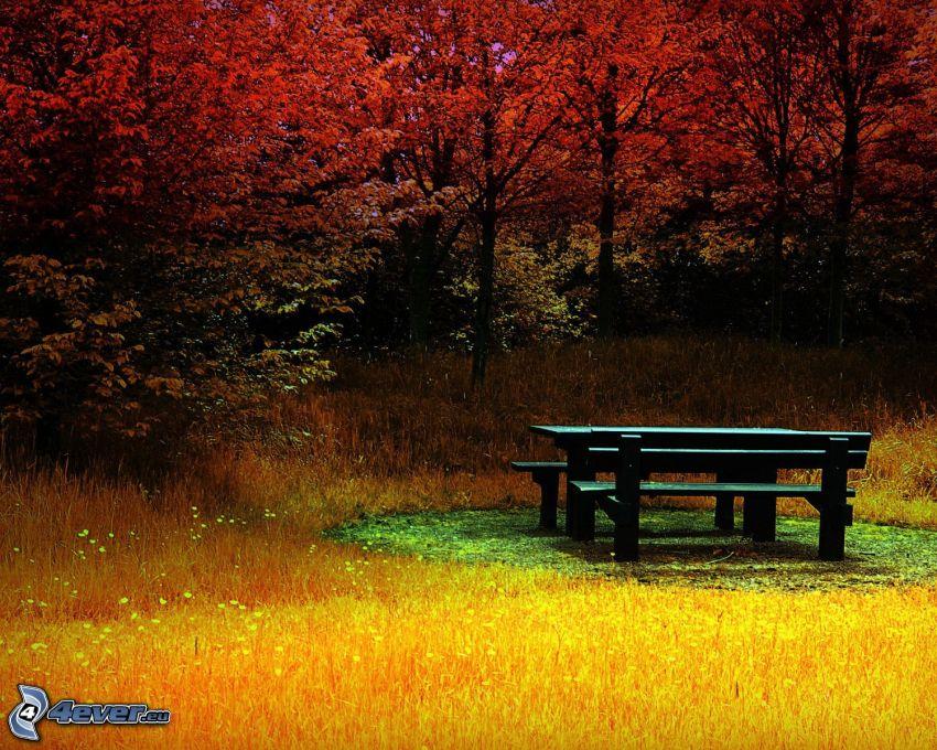 sentado, mesa, bancos, árboles de colores, hierba