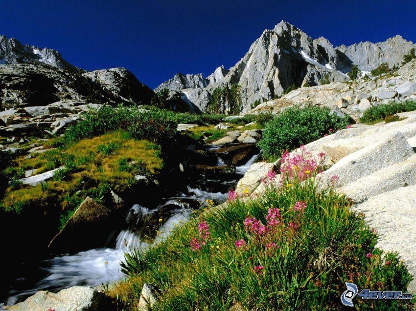 Sierra Nevada, California, montaña, colina, corriente