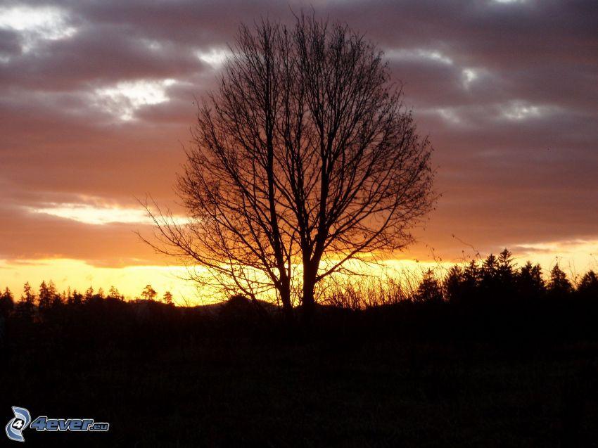silueta de un árbol, puesta del sol, alba de noche, silueta de un bosque