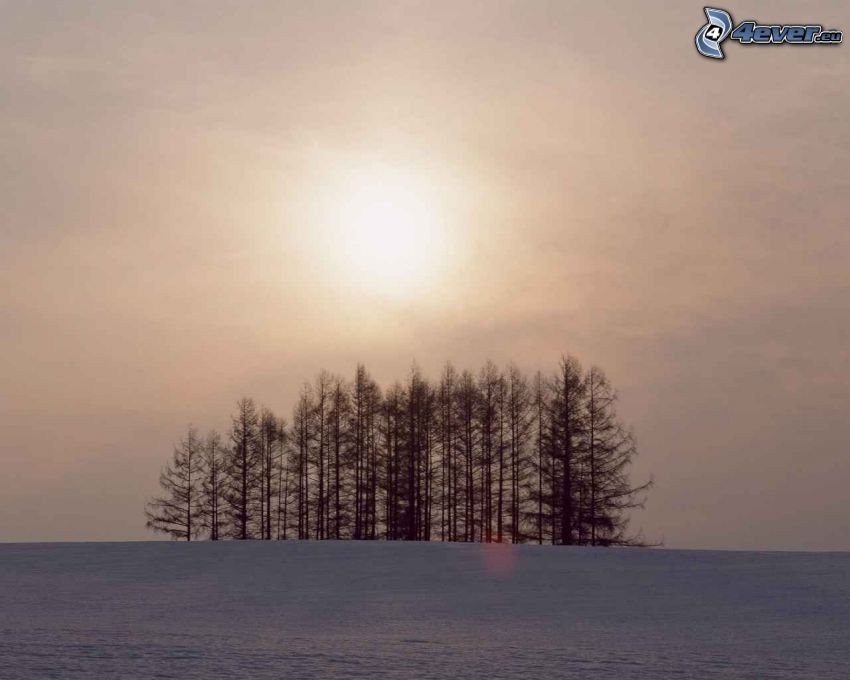 sol débil, bosque, campo, prado, invierno