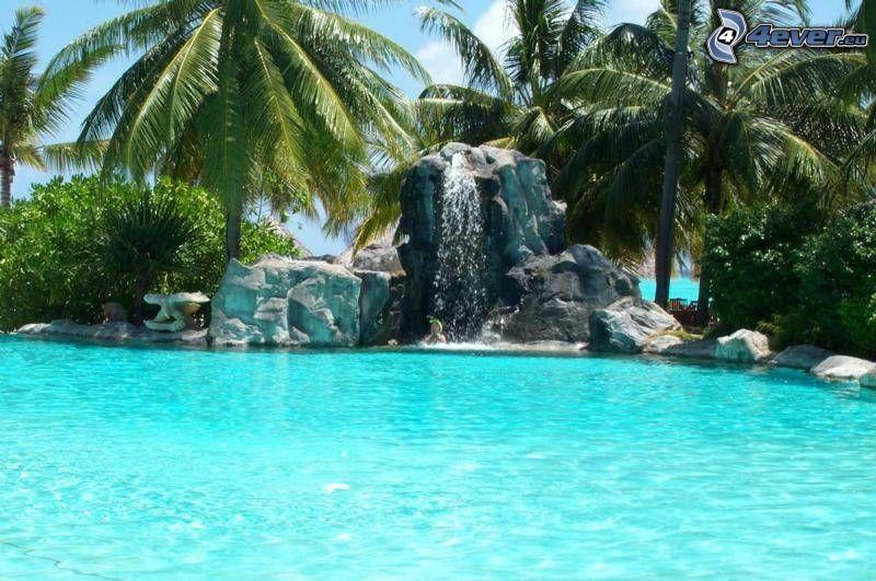 trópico, piscina, agua, fuente, palmera
