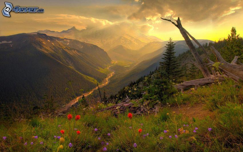 valle, montañas, flores silvestres