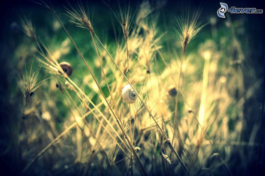 paja de hierba, caracoles