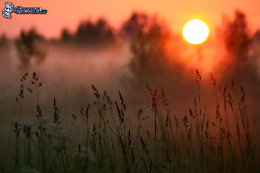 paja de hierba, puesta de sol sobre el campo