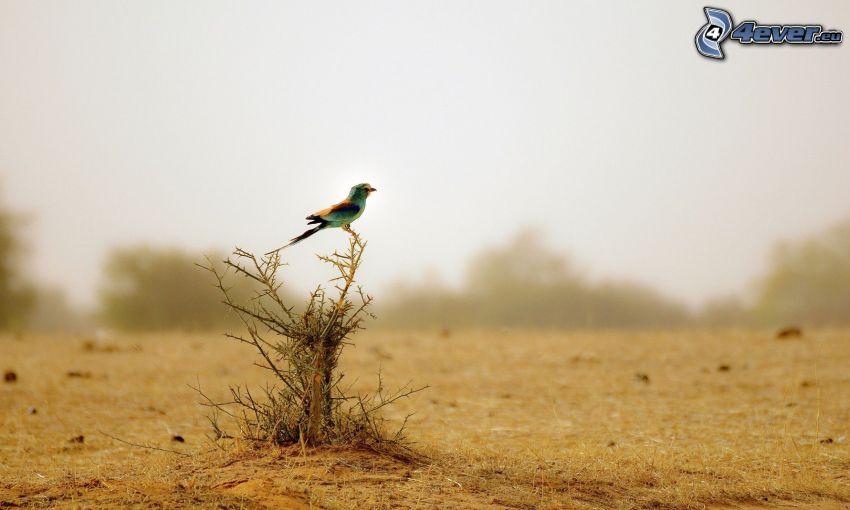 pájaro, arbusto, campo