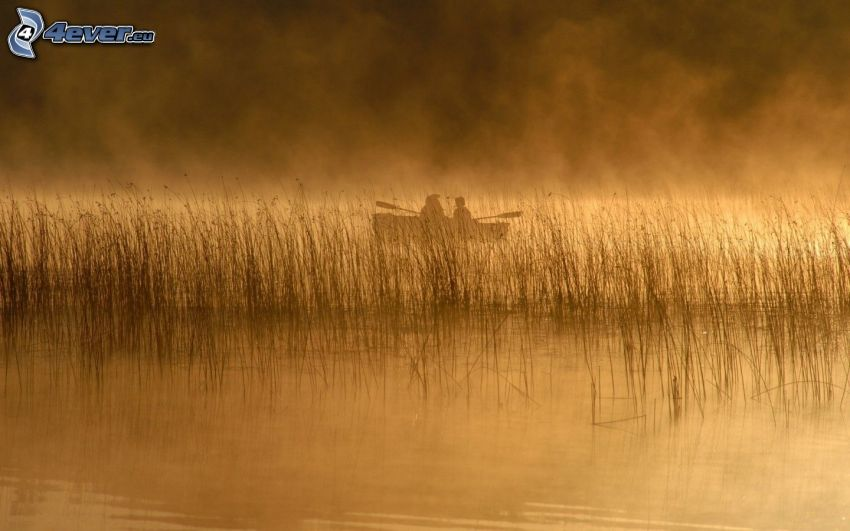 Pesca, lago, barco, mañana nebulosa