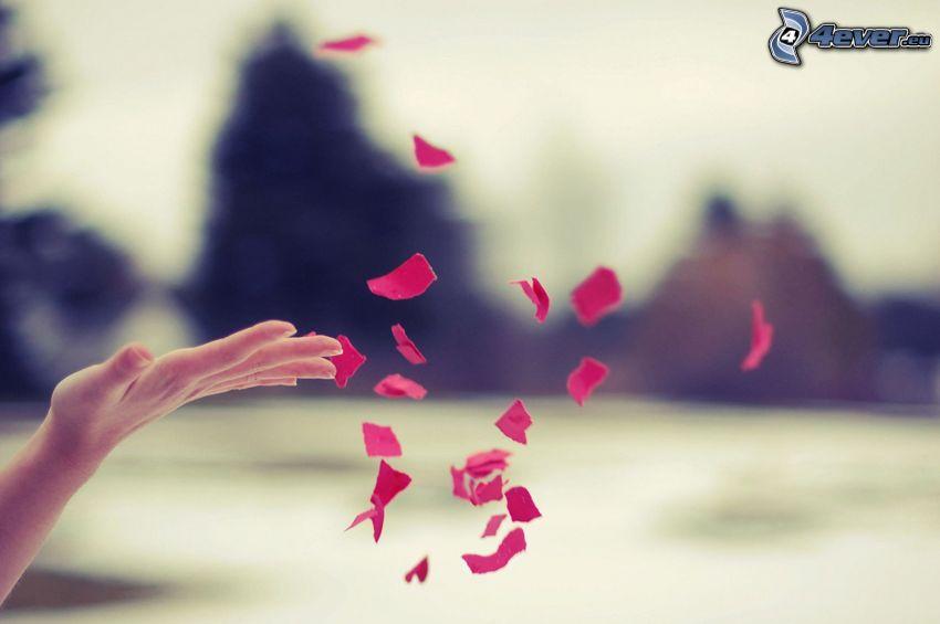 pétalos de rosa, mano
