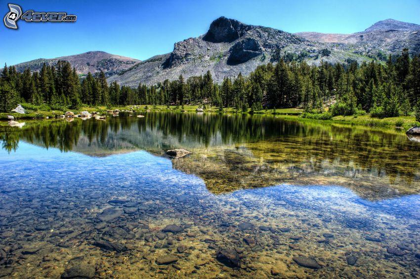 piscina, árboles coníferos, montañas rocosas