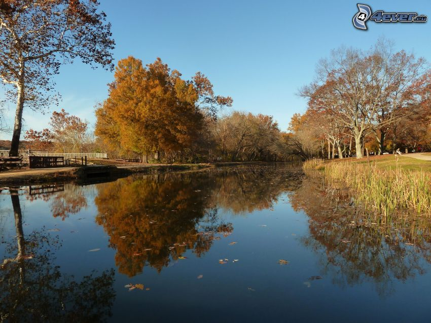 piscina, árboles otoñales, reflejo