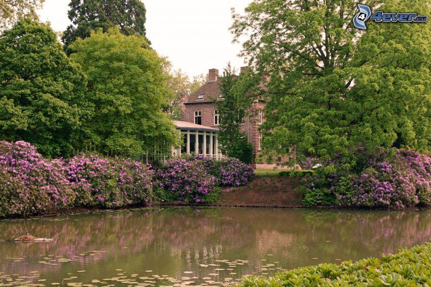 piscina, arbustos en flor, casa
